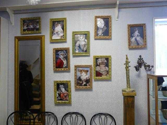 Музей кошек в Москве: экспозиции, деятельность и инициатива