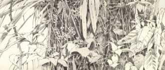 Как нарисовать джунгли карандашом? Общие правила