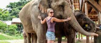 Слоны в Тайланде: интересные факты